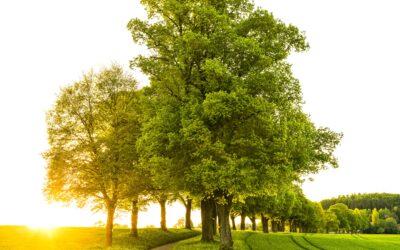 Webinarium – Wstęp do diagnozowania oraz możliwości i metody ograniczania chorób drzew